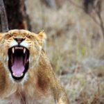 Трансформирай гнева – тренинг с меридианни подходи – ОНЛАЙН